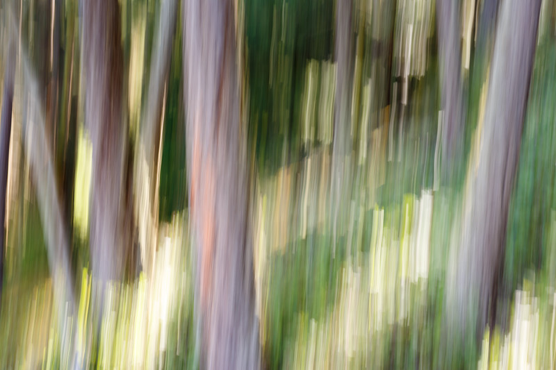 Whidbey, Deception Pass - Abstract forest with intentional camera movement