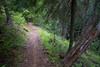 Kittitas, Mt. Baldy - Steep trail through trees next to snag