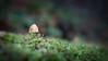 Skagit, Kukutali Preserve - Small capped mushroom on log, close up