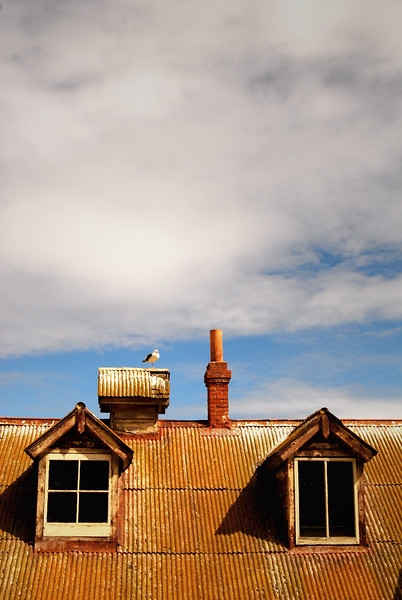 Gull on a Hot Tin Roof