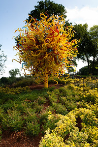 Dallas Arboretum featuring Chihuly Glass