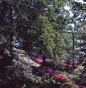 National Arboretum 4/85