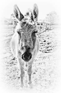 Donkey Game Face