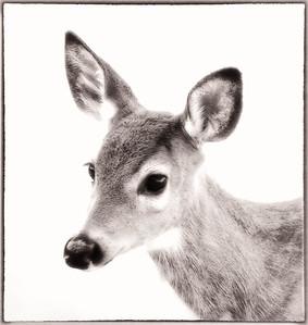 Deer  10 13 09  009 - Edit-2 - Edit - Edit