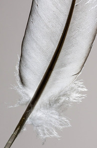Feather  08 16 12  030
