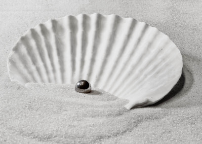 Scallop Shell  07 14 12  002-3