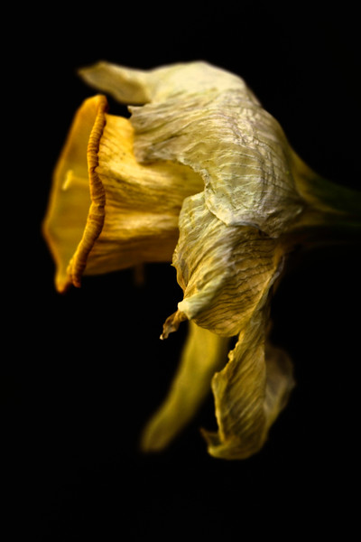 © 2015 Frank Hutnak <br /> They flash upon that inward eye<br />  Which is the bliss of solitude;<br /> And then my heart with pleasure fills,<br /> And dances with the daffodils.