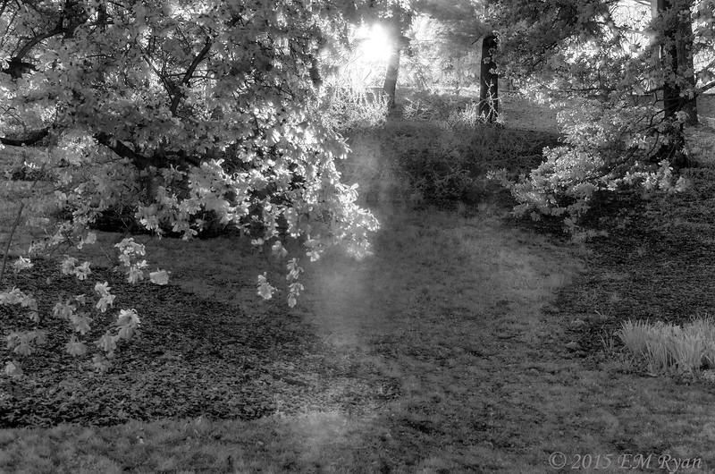 """© 2015 Lisa Ryan """"And dances with the daffodils"""""""