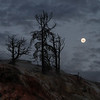© 2012 Steve Schroeder - Yellowstone Moonset