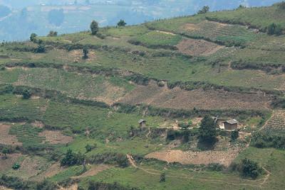 Farm, rural Uganda.