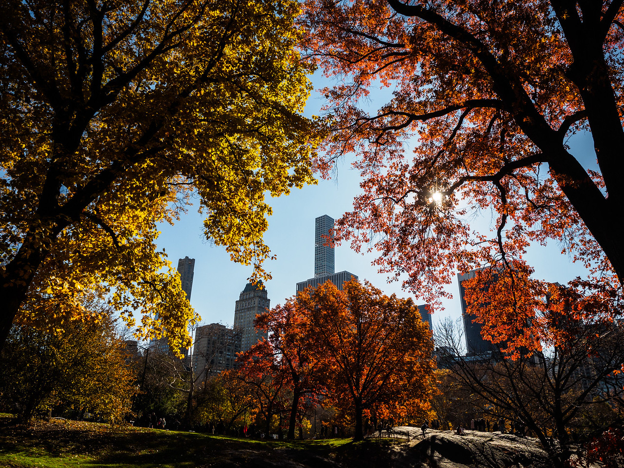 Central Park on Thanksgiving Day