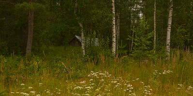 Field and wildflowers, rural Finland.
