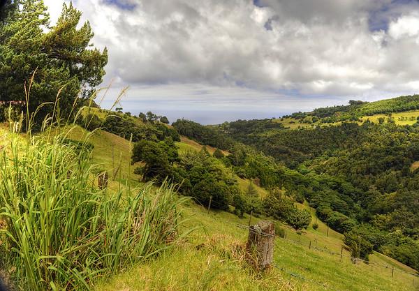 Landscape, St. Helena Island.