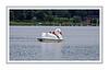 D183-2013  Paddleboats, etc., for rent.<br /> .<br /> Kent Lake, Kensington Metropark, Michigan<br /> July 2, 2013