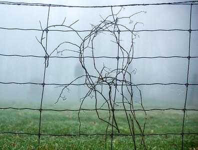 DrivingToWork;KennedyYear2008;Fog;Fence