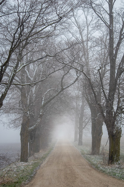 Up early on a foggy and frosty Saturday morning