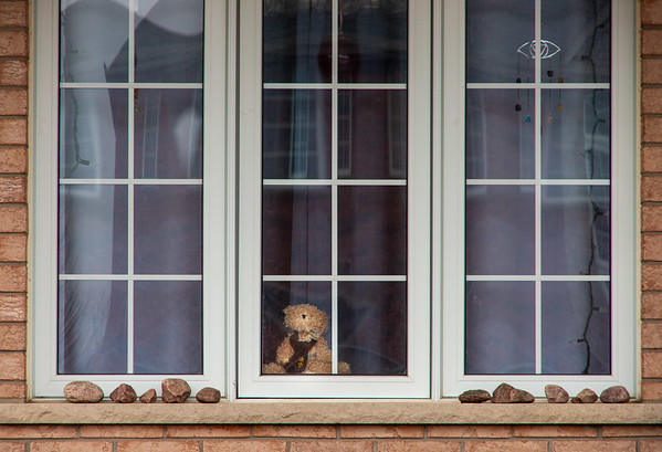 """Find the bear.  To entertain children on walks through the neighbourhood, some families are placing teddy bears in windows, to play a game of """"Find the Bear""""."""