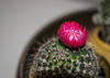 I'm testing a new camera body. On camera flash of nearby subjects is often a mess but I rather like this test shot of Mali's little barrel cactus.