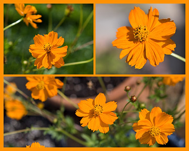 Mali grew these little orange potted flowers from seed.  She says looking at them makes her feel happy.