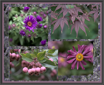 We visited Red Butte Gardens on an overcast fall day. The subdued tones here echo the quality of the light.