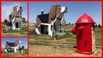 Who said roadside attractions are dead? On the way back from Coeur d'Alene we spotted this large hokey wooden dog bark park structure near the Cottonwood Idaho turnoff.  I stopped in and chatted with the owner of the dog park about how the construction of Interstate Highways inadvertently decimated quirky American roadside attractions.