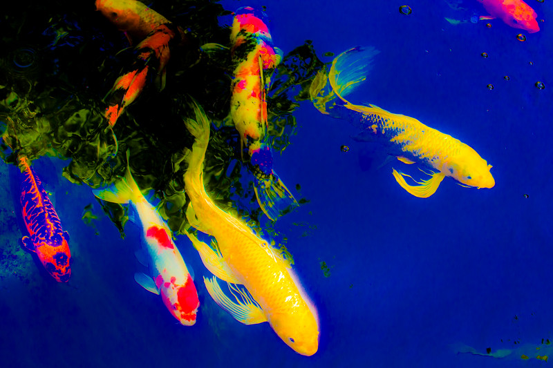 Abstract carp.