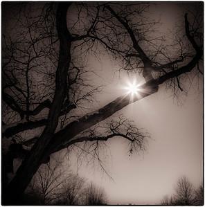 Winter Trees  02 10 10  056-2