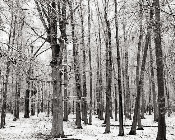Receding Tree Line - Charlotte, NC