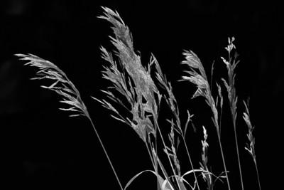 BC Plants 9-22-07 11-39-34 AM - Edit - Edit