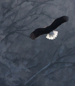 Bald Eagle  01 10 10  053 - Edit