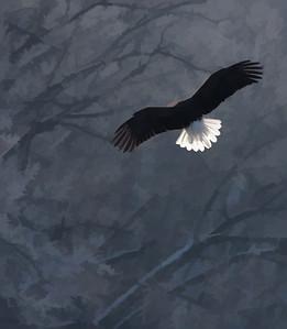 Bald Eagle  01 10 10  053 - Edit