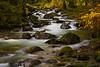 Fall at the Creek