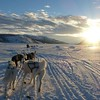 Dog Sleigh Norway by Carroll Gifford