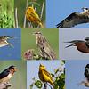 © 2014 Steve Schroeder - Avian Chorus