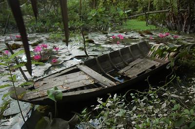 Old boat in a water garden, Mekong backwaters near Can Tho, Vietnam.