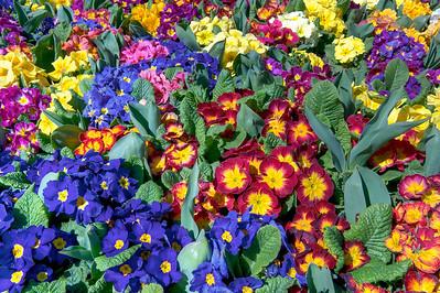 Flowers, Istanbul, Turkey.
