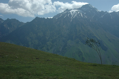 Tree, Caucasus mountains near Kazbegi town, Republic of Georgia.