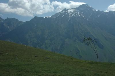 Tree, Caucasus mountains near Kazbegi town, Republic of Georgia.