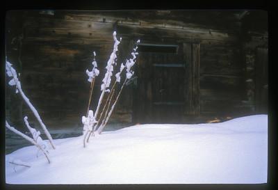 Snowstorm, Grindelwald, Switzerland.