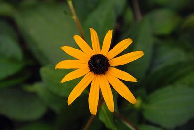 Flower, Georgia, USA.