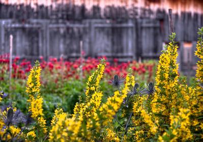 Flower garden in Mürren, Switzerland.