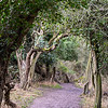 FOWLMERE RESERVE WALK by GILL THURGOOD