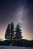 Kittitas, 29 Pines - Three tall pine trees with Milky Way