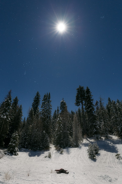 Kittitas, Blewett Pass - Full moon above forest in snow with person lying on ground