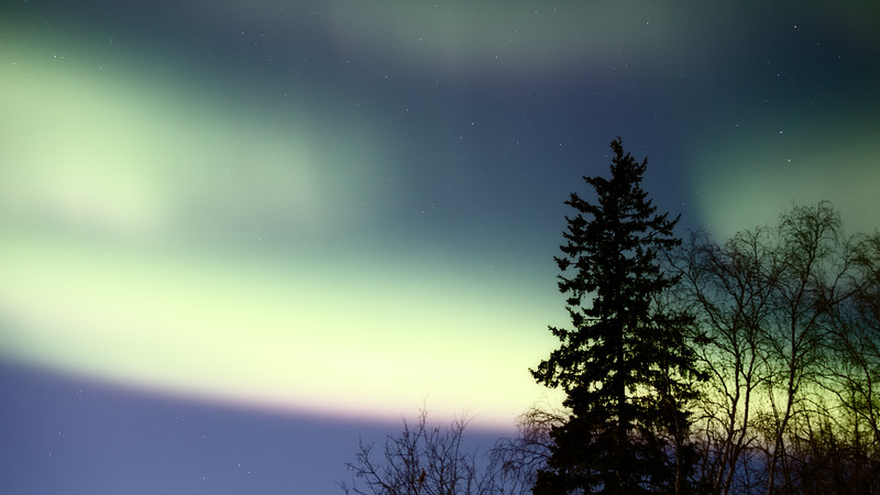 Yellowknife, Giant Mine - Aurora behind a cluster of trees