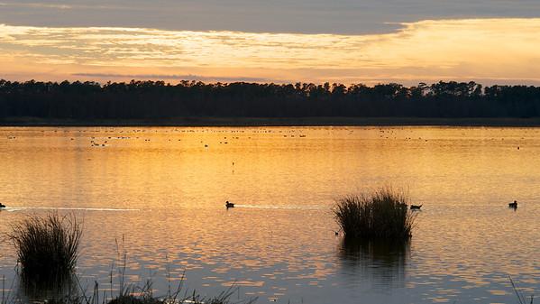 Lake Mattamuskeet 361