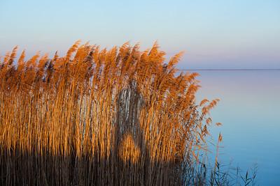 Lake Mattamuskeet 441