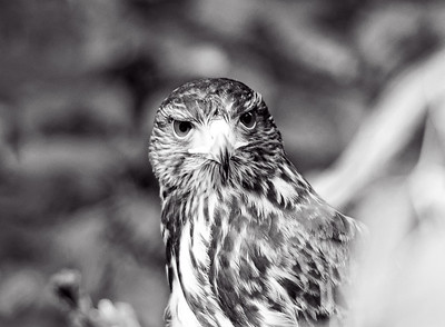 Birds of NC