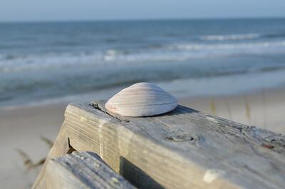 Topsail Beach 80_23815