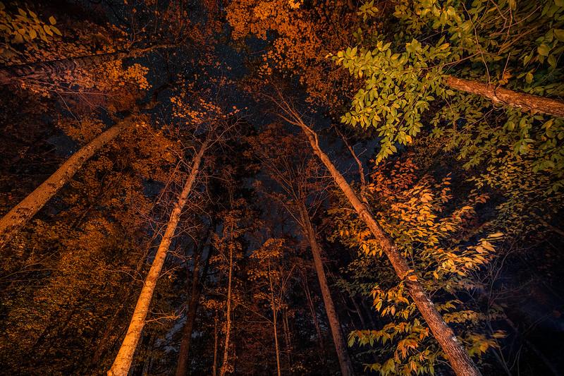 © 2014 Lisa Ryan - Stars and Firelight 1